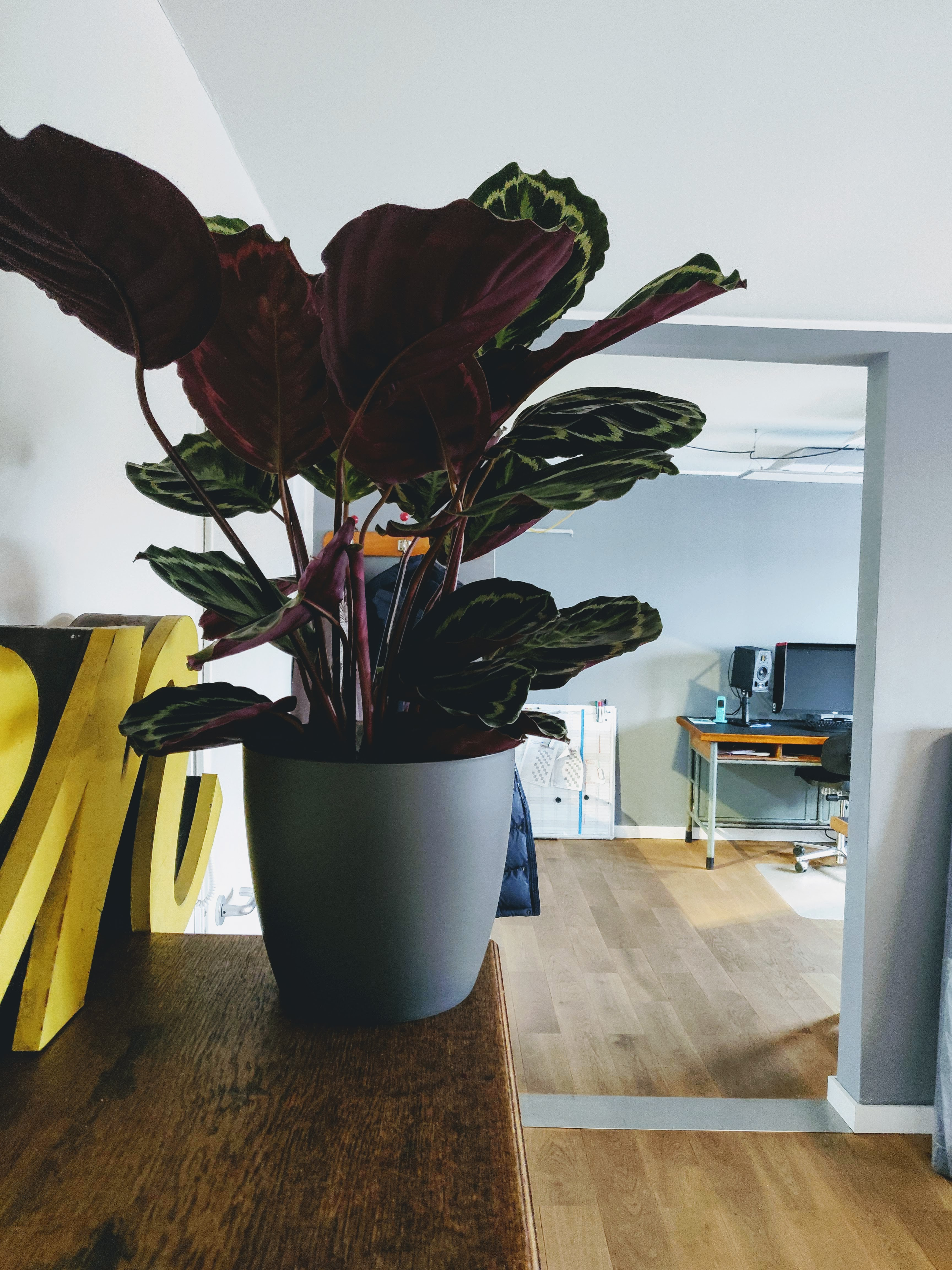 große Topfpflanze im Büro