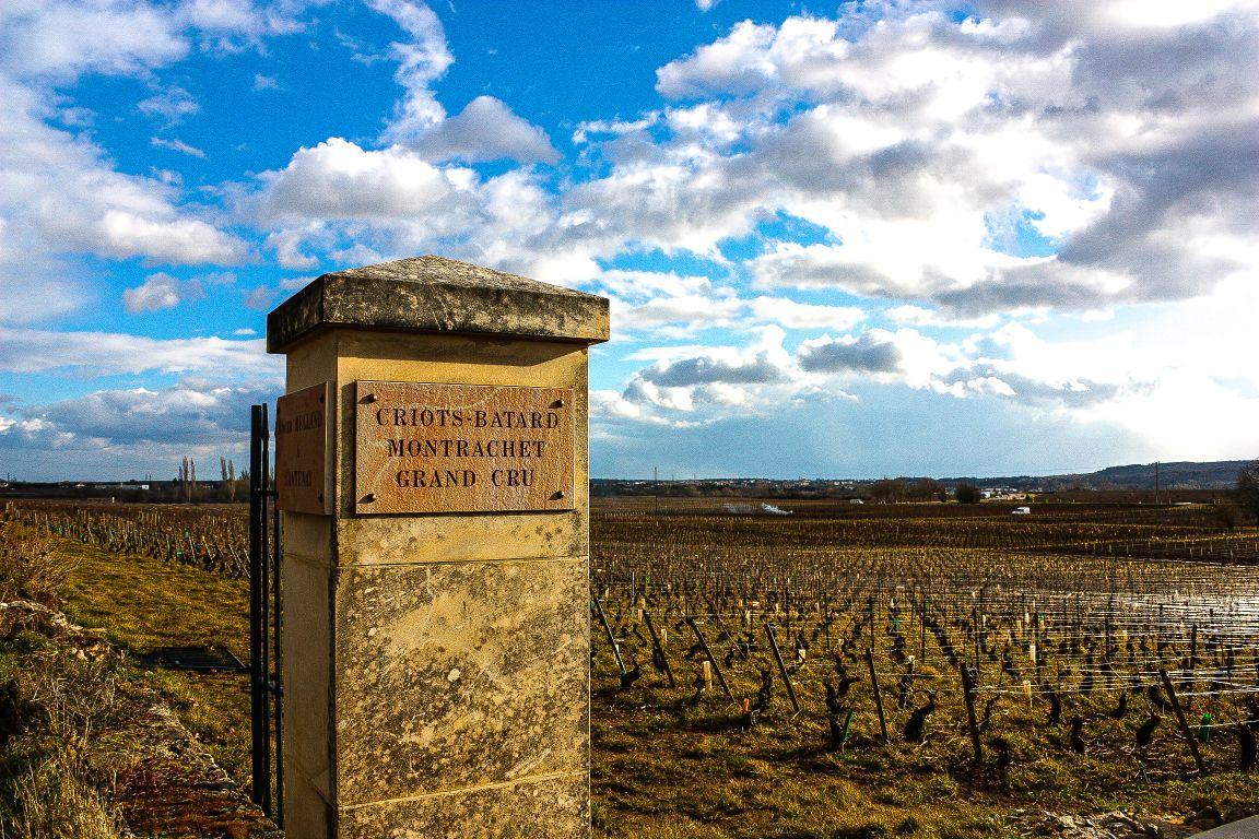 Criots Batard Montrachet vineyard