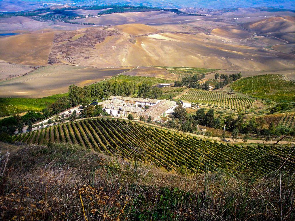Looking down over vineyards
