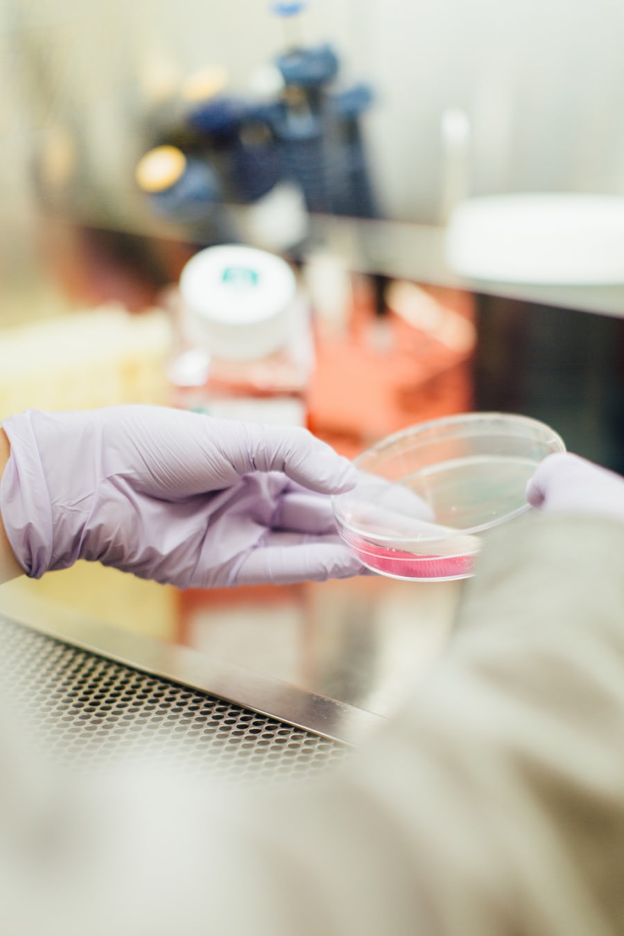 hangs wearing latex gloves holding a petri dish doing cancer genetic testing in a laboratory