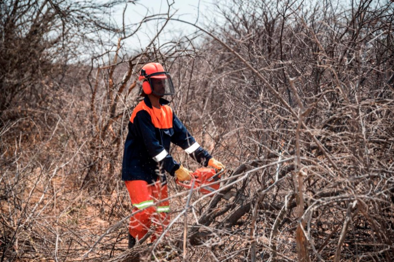 The greenest charcoal comes from Namibia