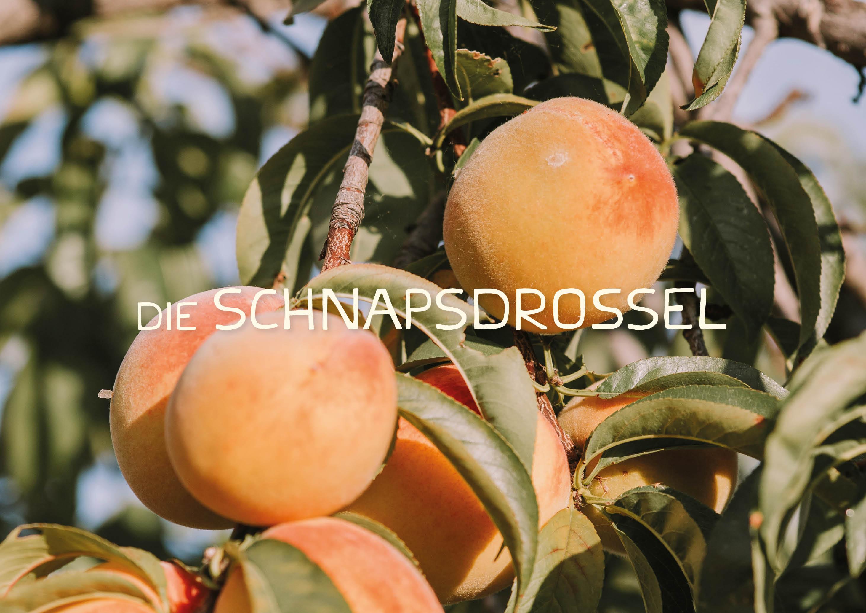 Schnapsdrossel brand identity - handmade typography - by Magdalena Weiss