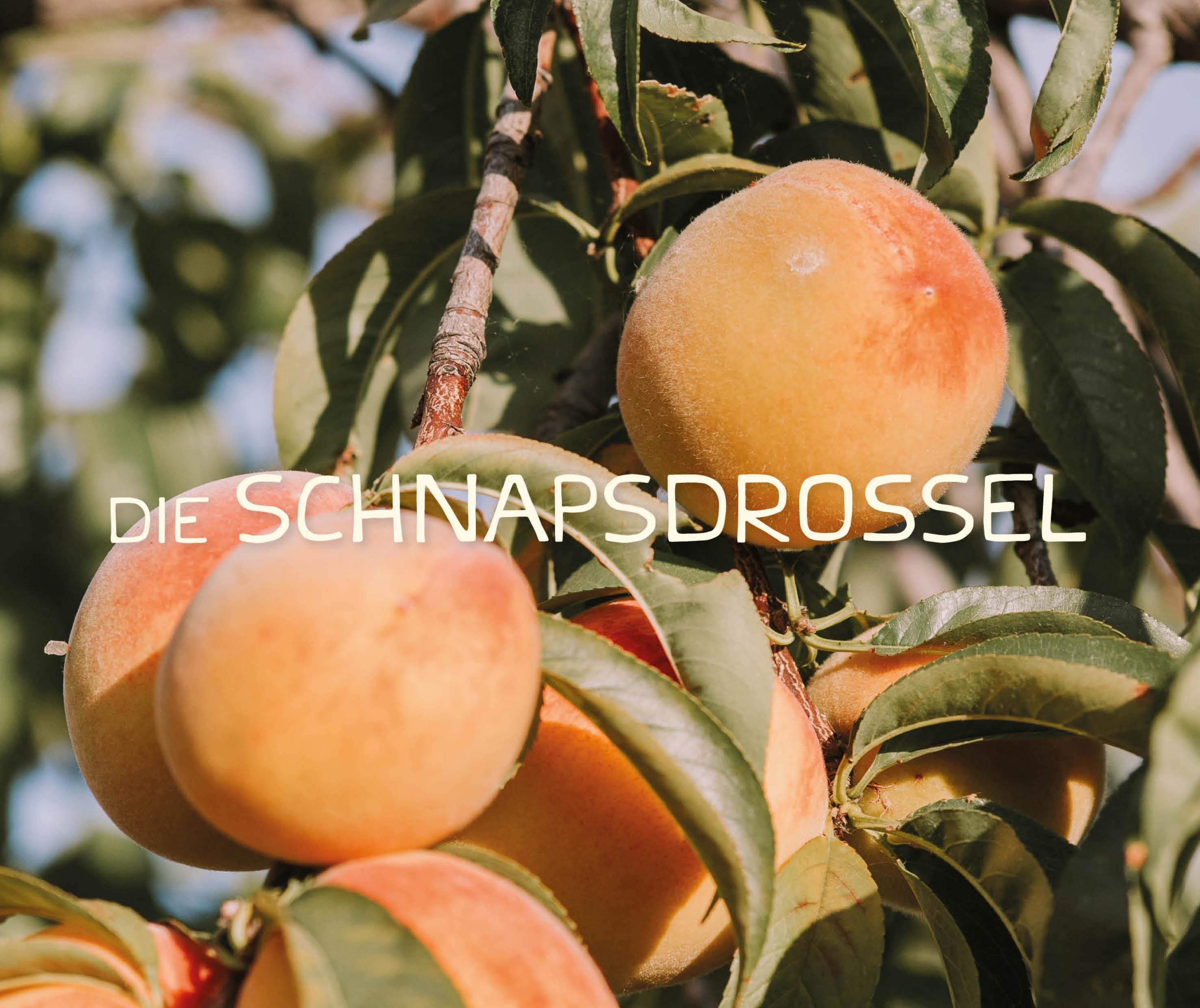 Die Schnapsdrossel Brand Identity (Handmade Typography) by Magdalena Weiss