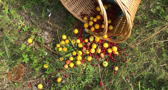 Fallen basket with fruit spilling onto the ground