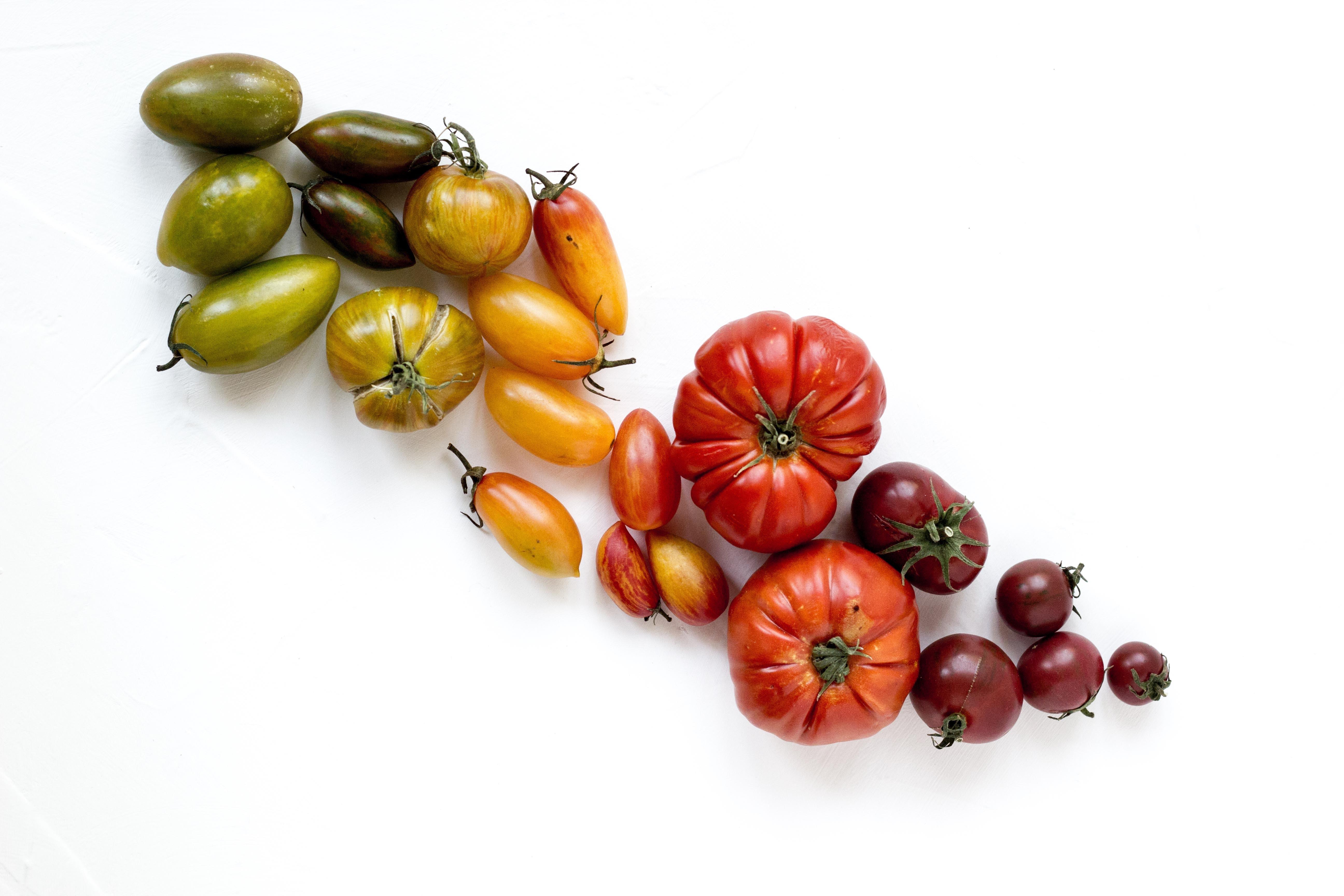 Koopr-tomates-rezel-apacionado-unsplash