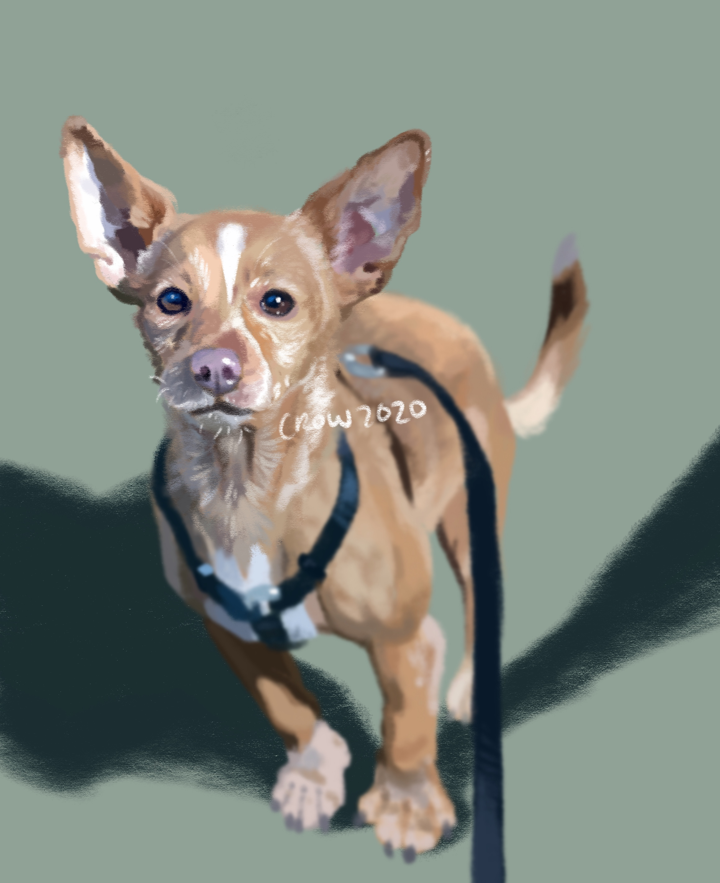 Digital illustration in a painterly style. It is of a small orange dog wearing a black harness. The background is mossy green.