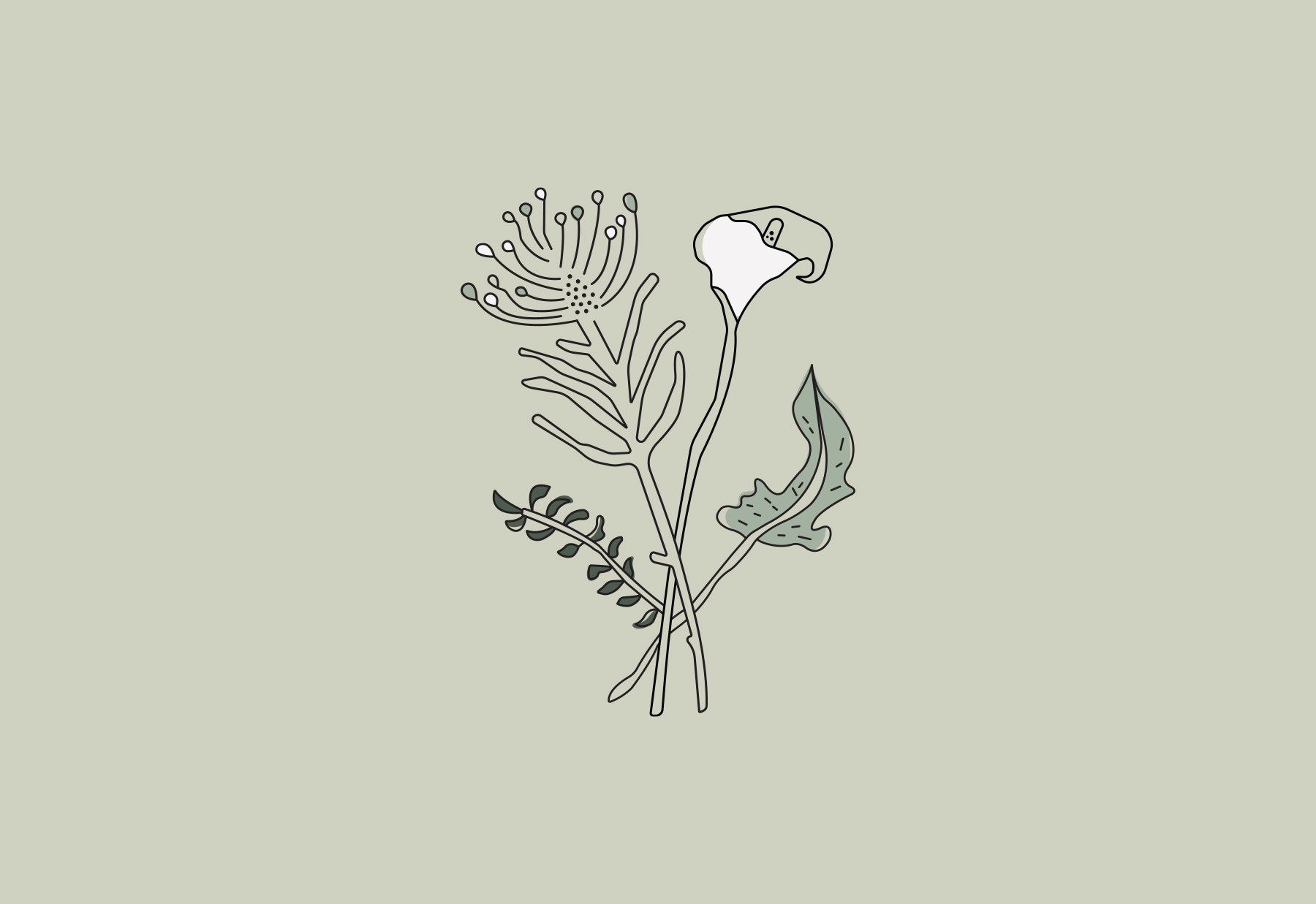 Illustration of South African flowers for a boutique florist