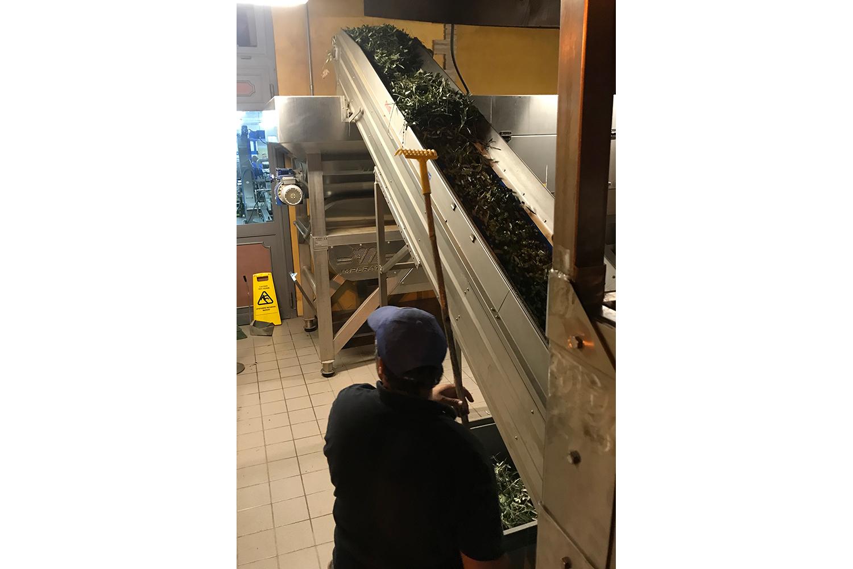 Die Verarbeitung der Olivenernte von Podere Riparbella