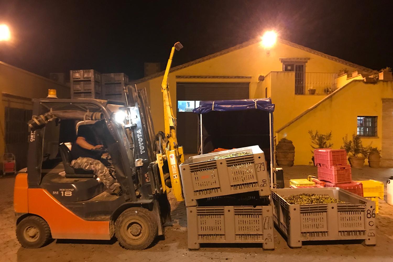 Die Auslieferung der Olivenernte von Podere Riparbella