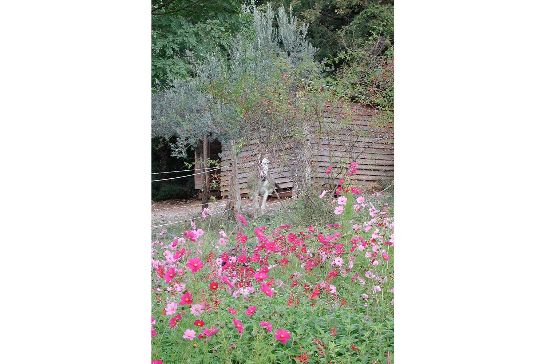 Die Umgebung mit Esel und Blumen von Podere Riparbella