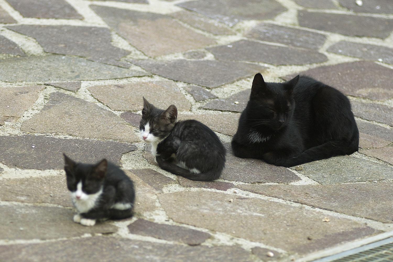 Katze mit Jungen auf Podere Riparbella