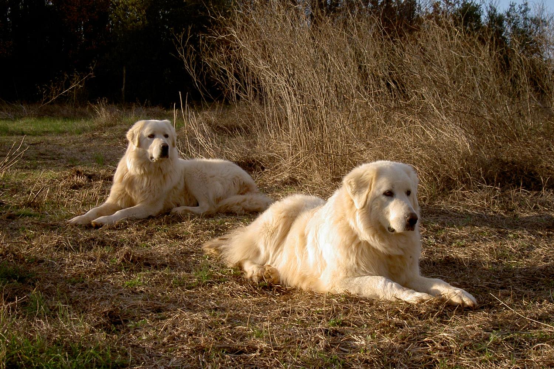 Unsere Hunde auf Podere Riparbella