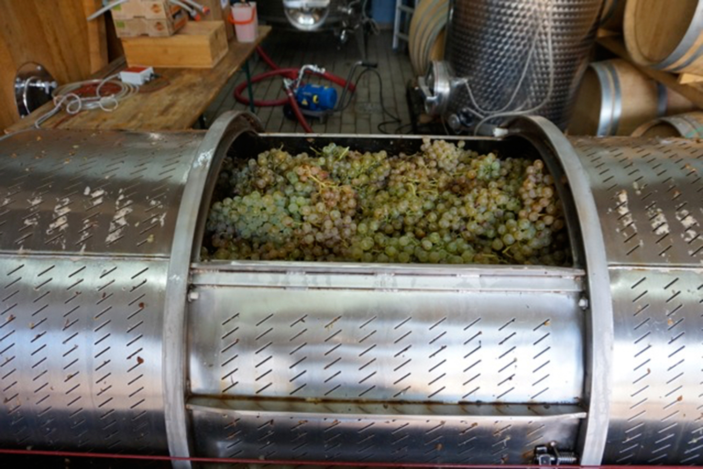 Produzieren der Weine von Podere Riparbella