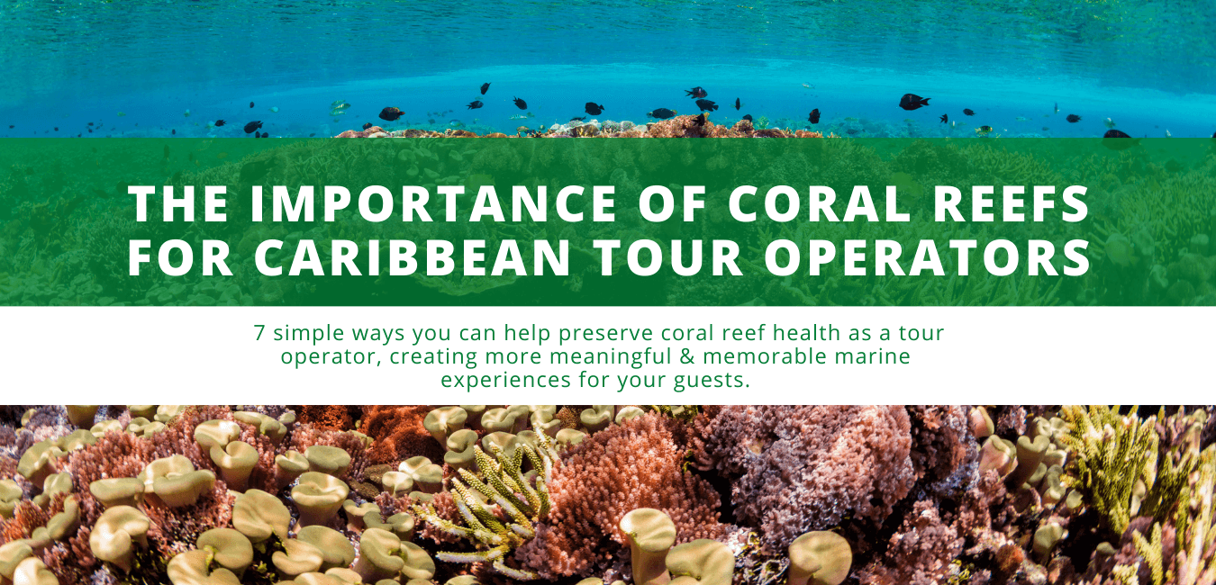 The Importance of Coral Reefs for Caribbean Tour Operators