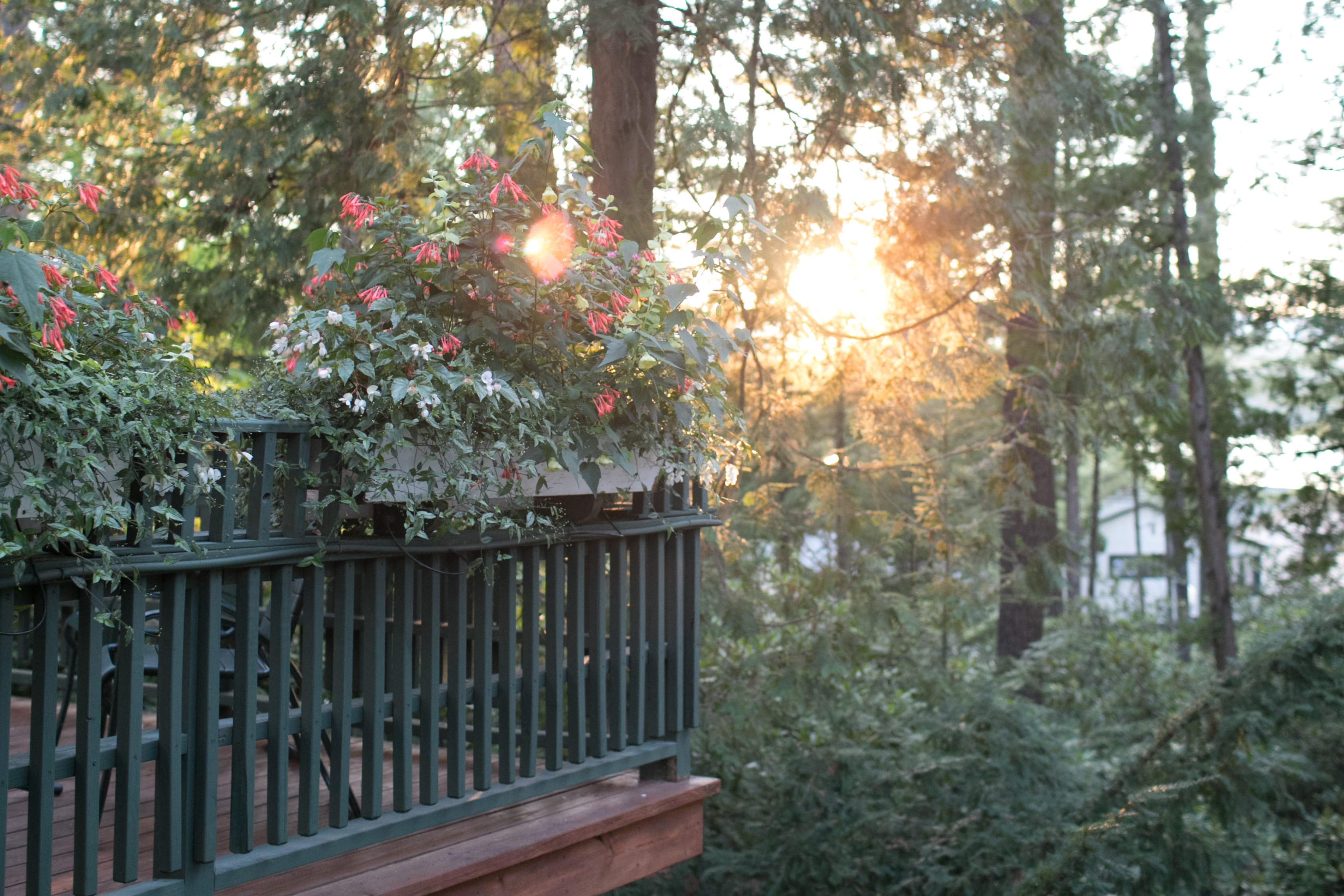 Flowers on porch railing