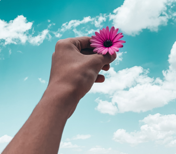 A hand holding out a flower to the sky