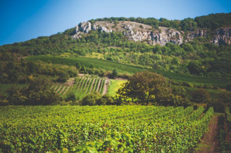 Tratě, Pergen - rodinné vinařství v obci Perná, u Mikulova