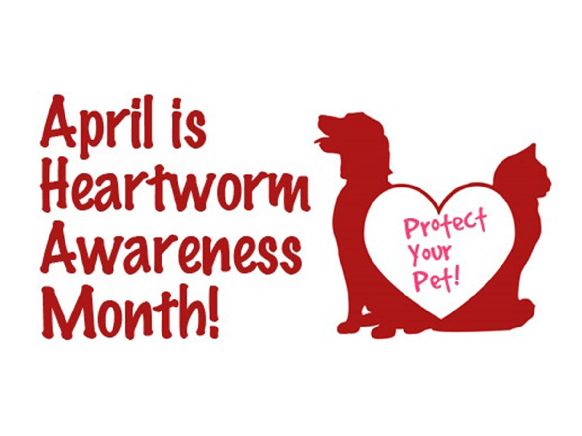 Educate Yourself About Heartworms And Save A Life