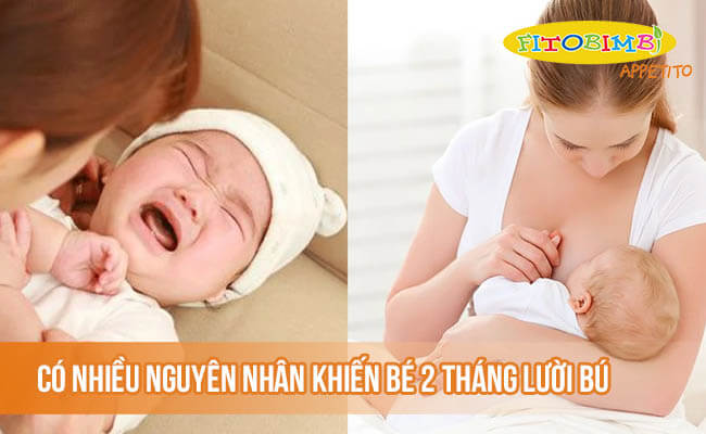 Có nhiều nguyên nhân khiến bé 2 tháng lười bú