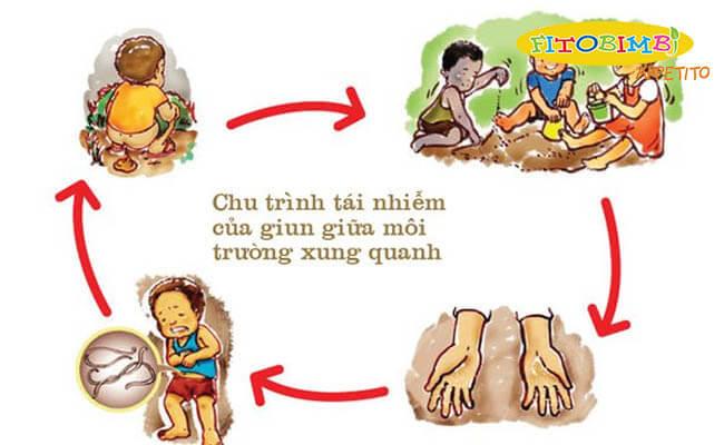Chu trình tái nhiễm giun ở trẻ nhỏ