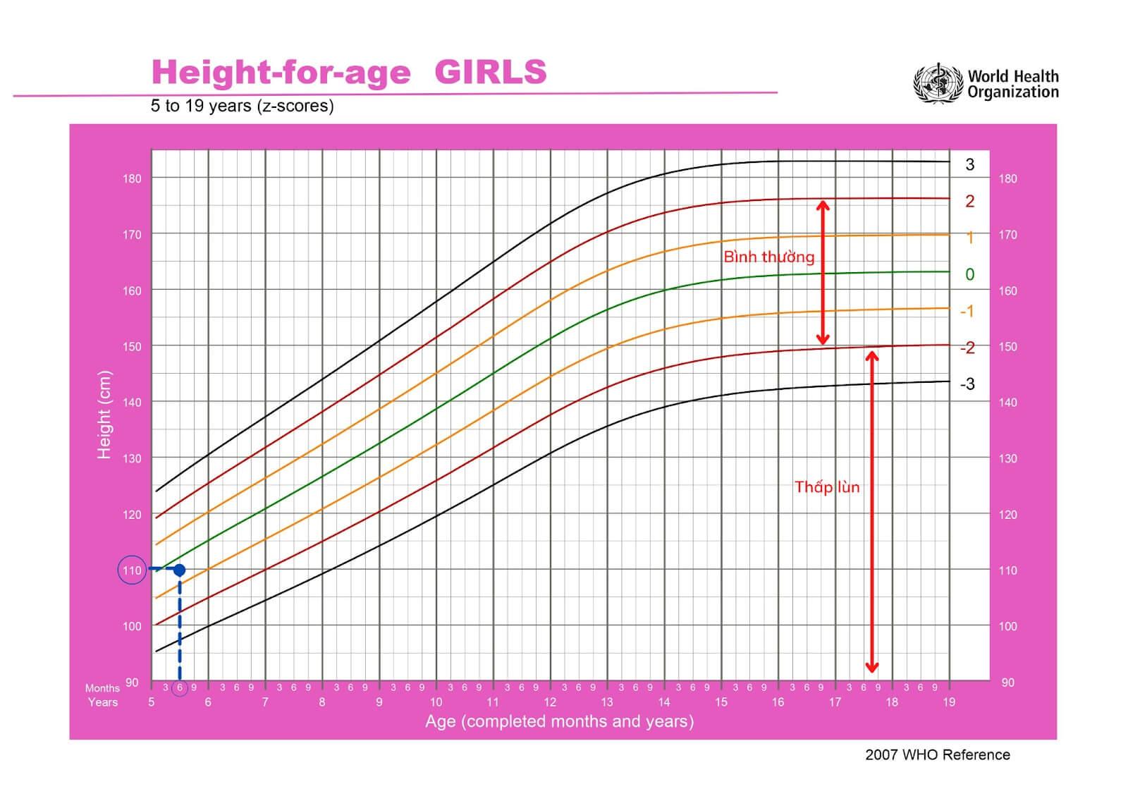Biểu đồ tham chiếu chiều cao ở trẻ gái 5 – 19 tuổi