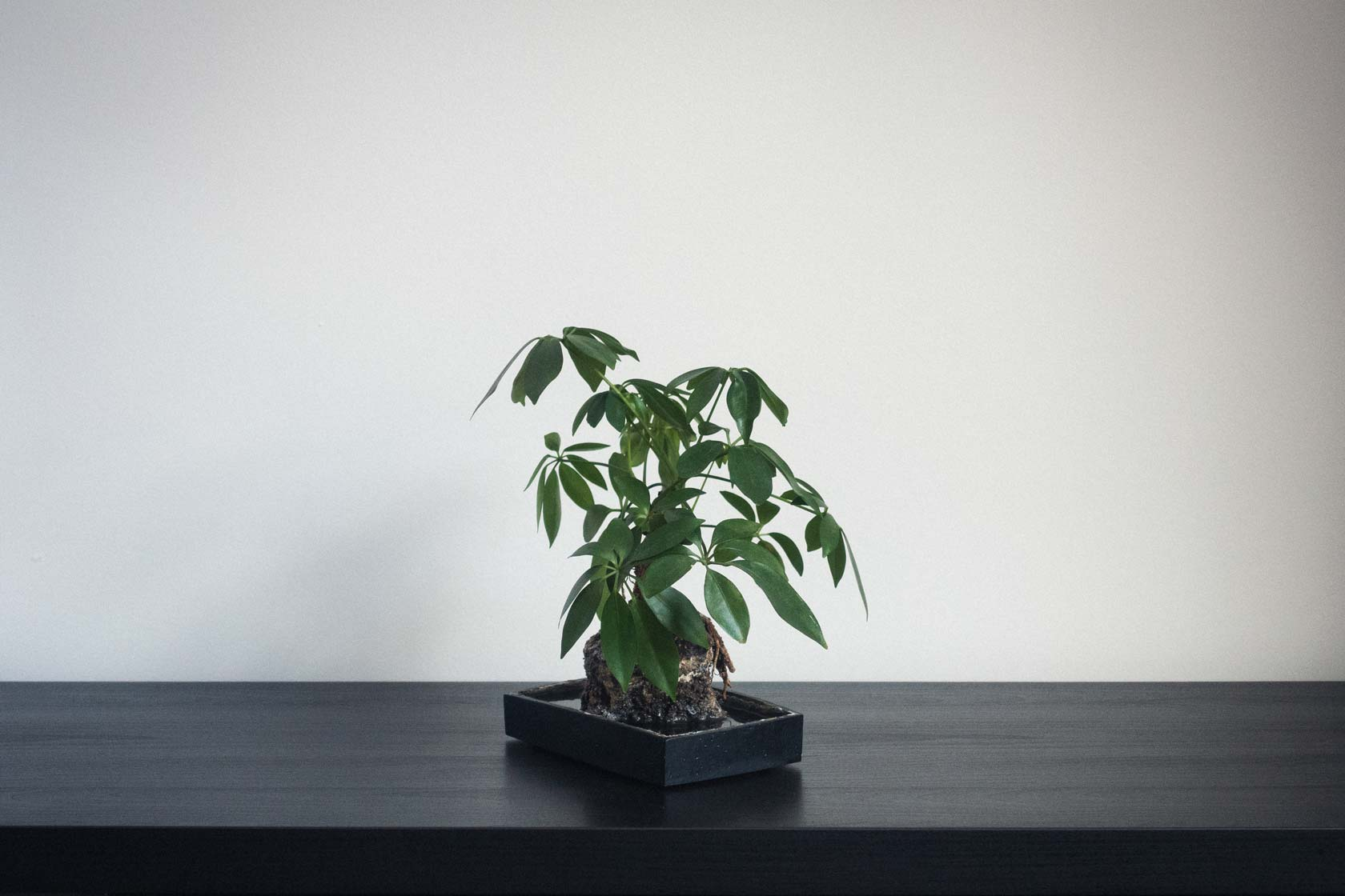 indoor plant in minimal desk space