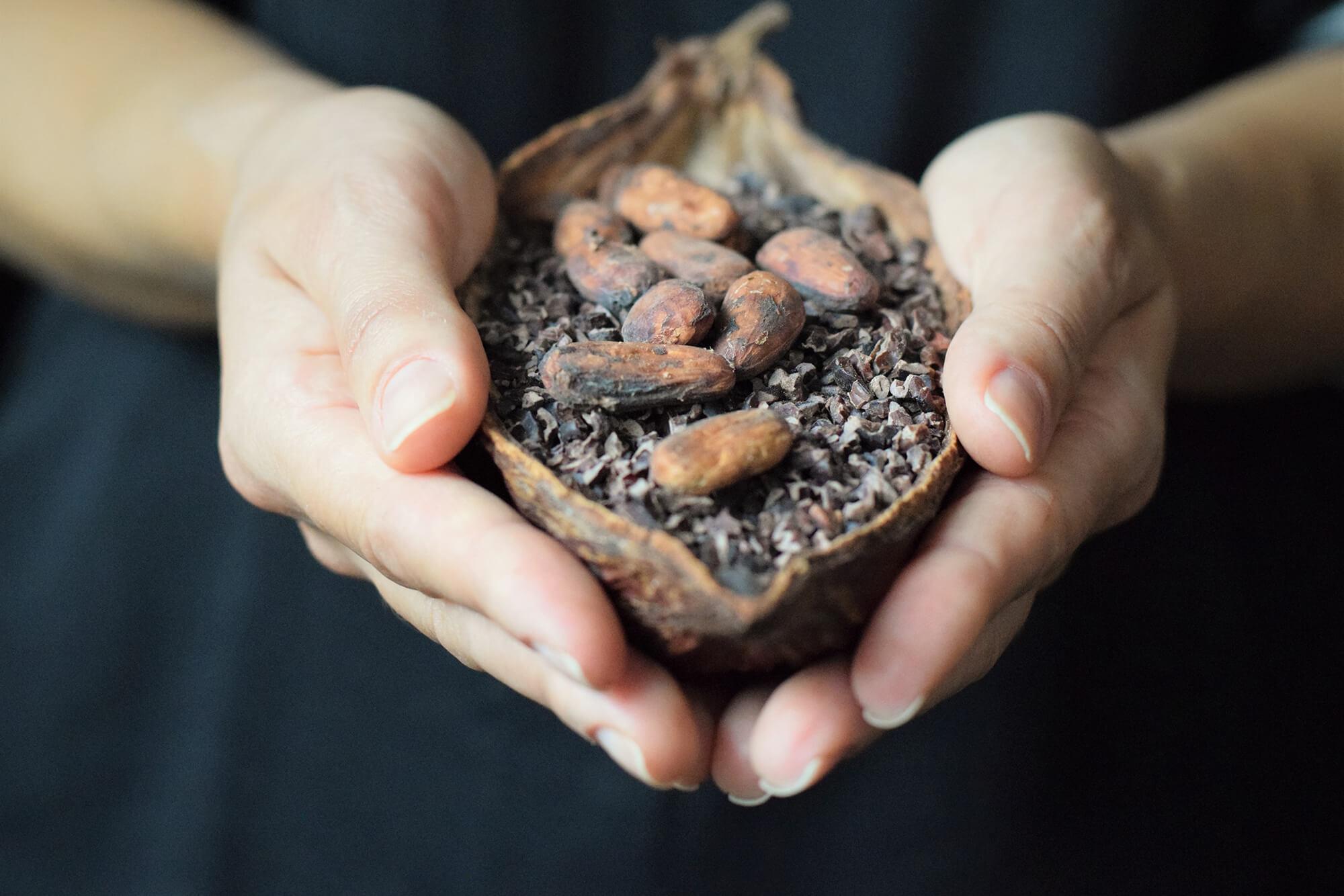 Fruto do cacao
