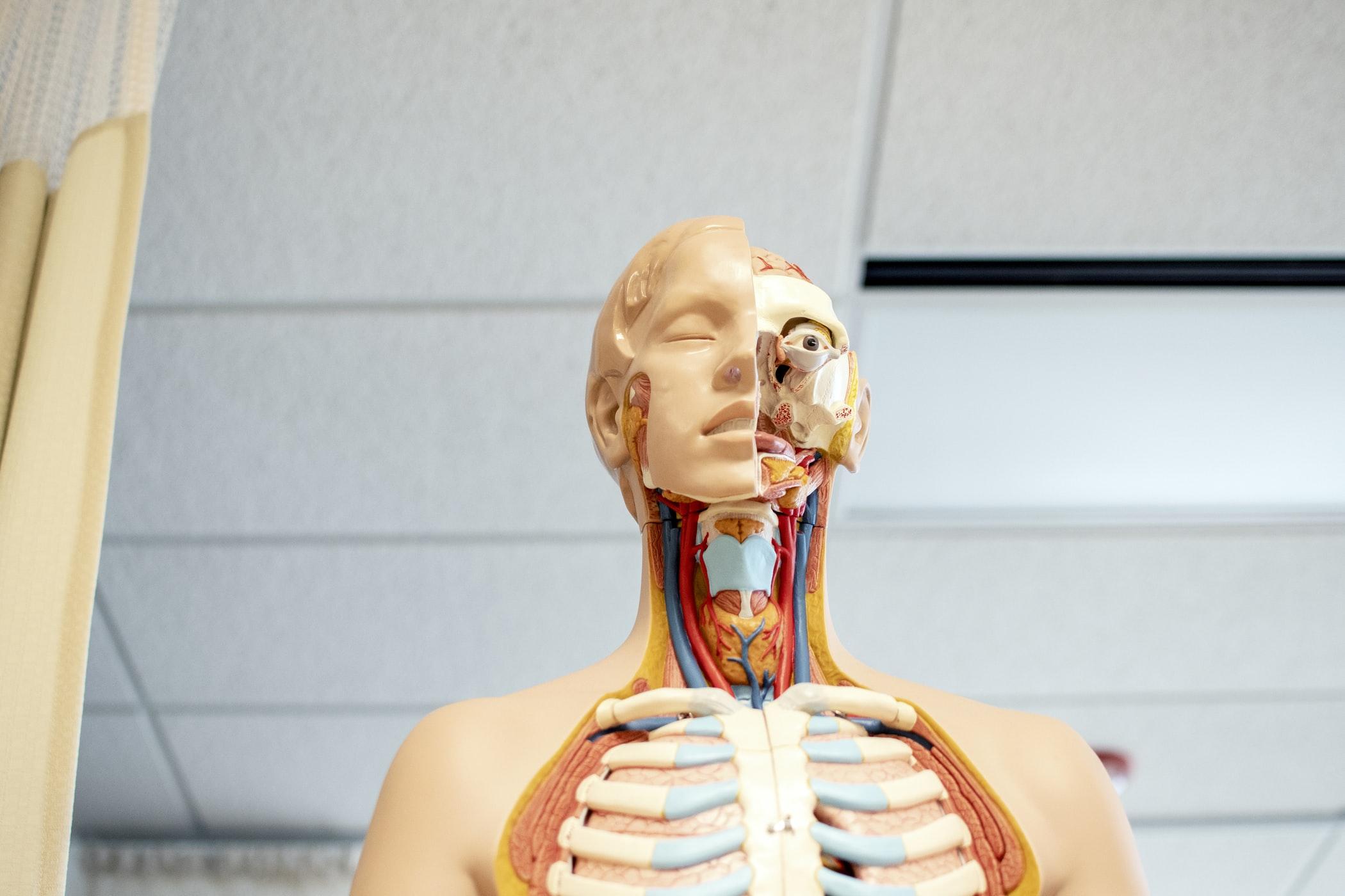 A medical mannequin