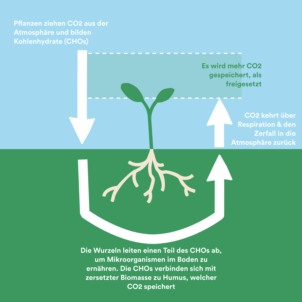 Erklärungsgrafik CO2 Speicher