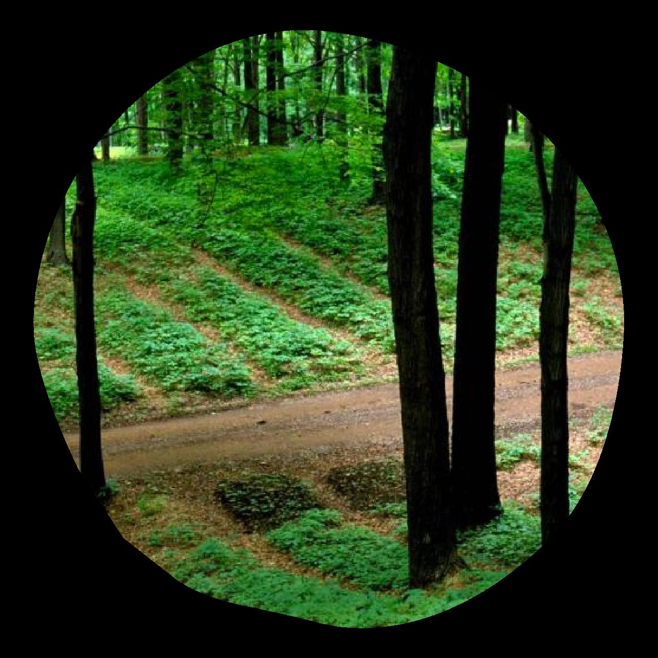 Klim Methode Forest Farming