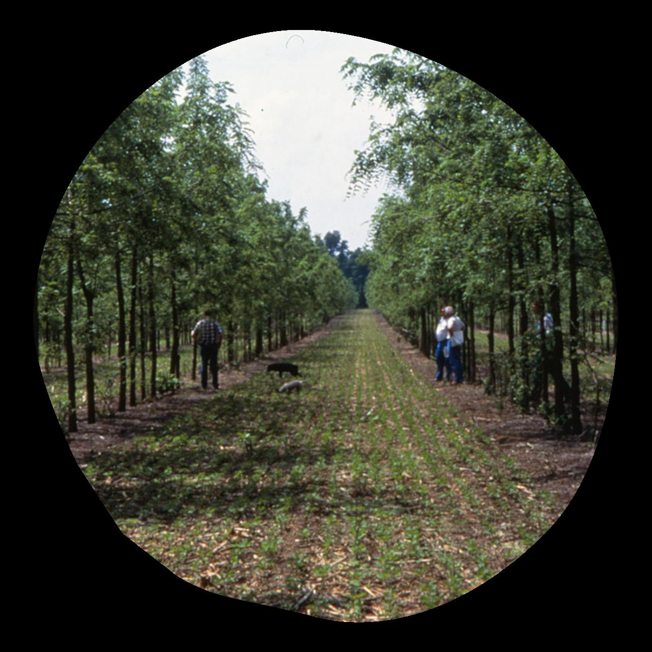 Klim Methode Agroforst