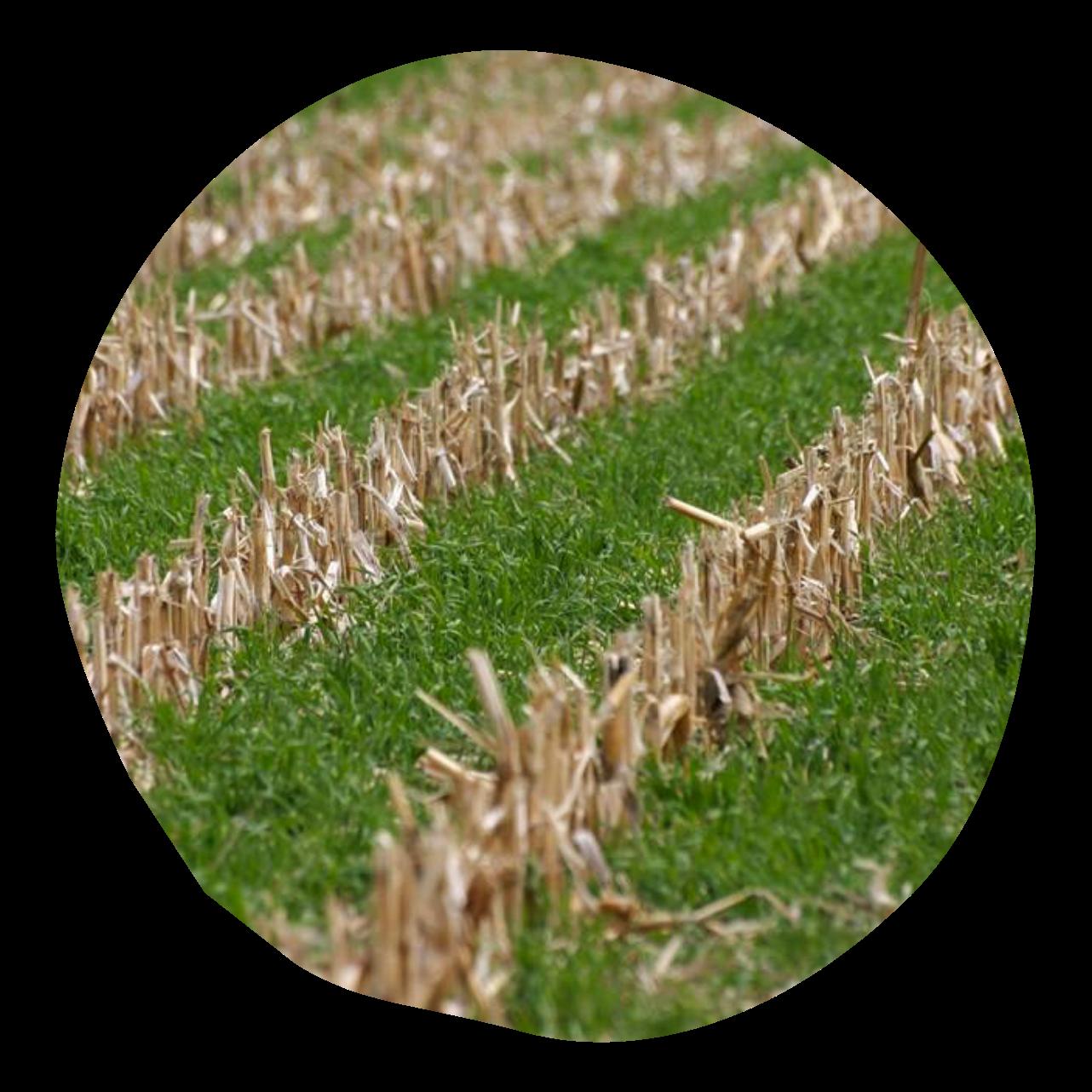 Klim Methode Cover Crops