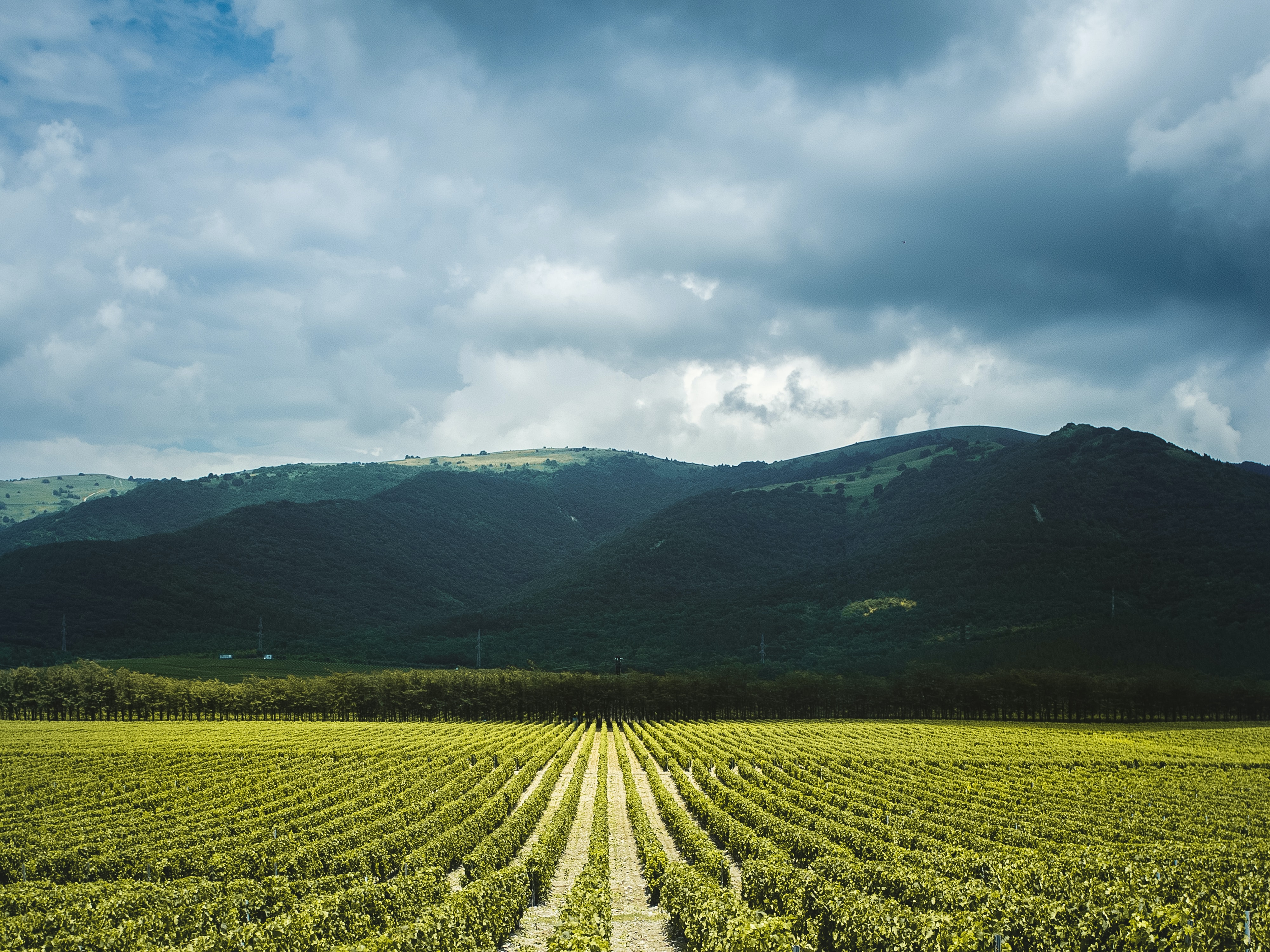 A wine vineyard that uses sulfur as a pesticide.