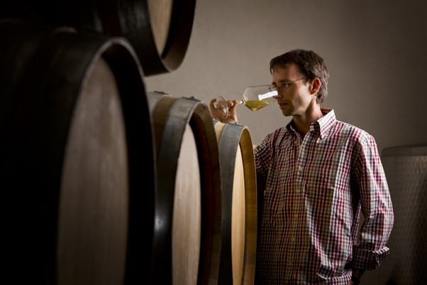 Winemaker tasting wine near a stack of wine barrels.