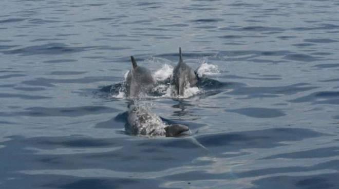 Avvistamento delfini nel cilento