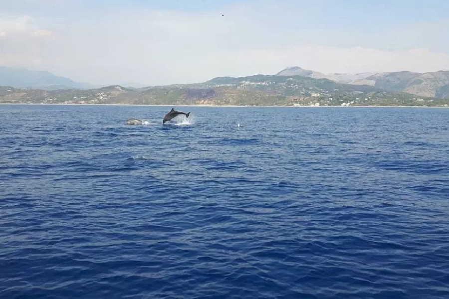 Delfini nella costa del Cilento