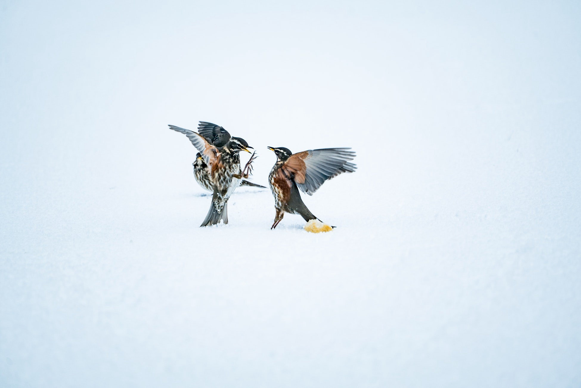 Two birds fighting over second hand labels and beliefs-