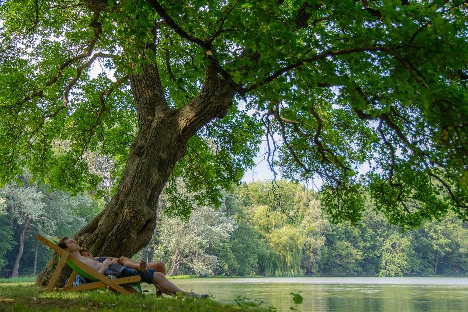 Chaise longue sous un arbre