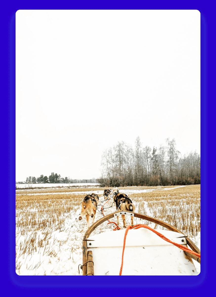 Cachorros puxando um trenó em um lugar com neve