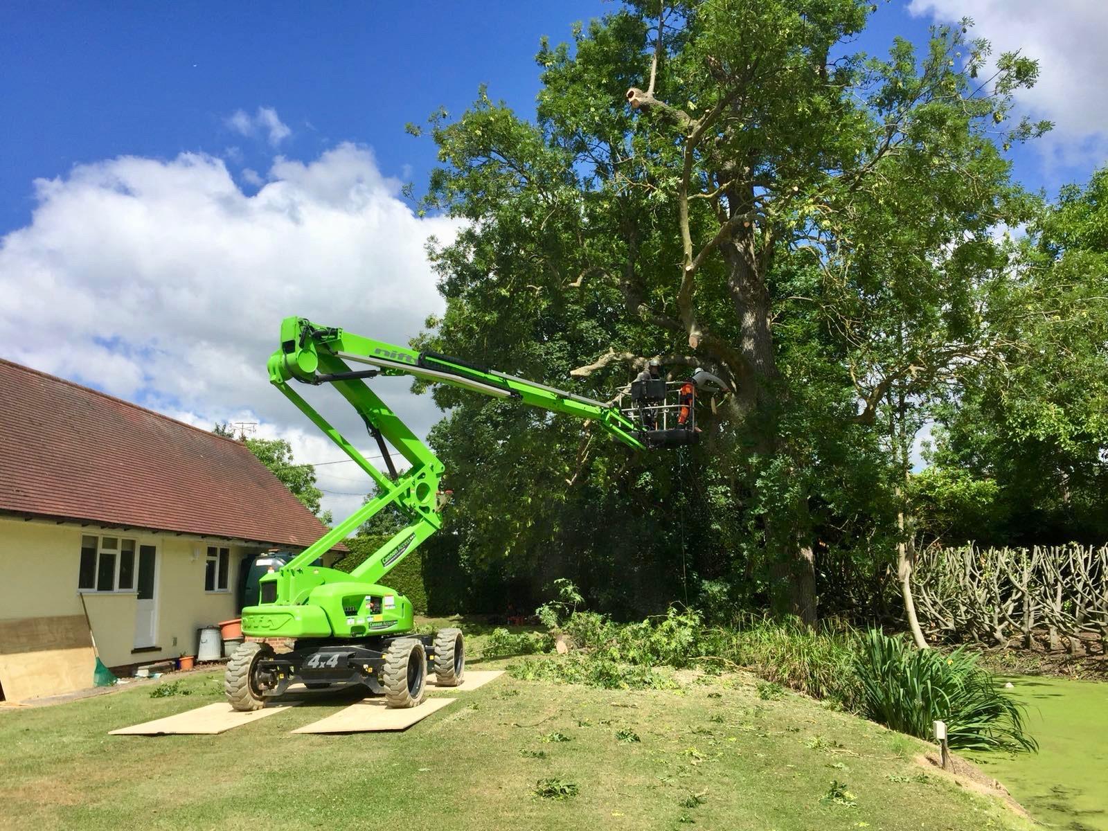 Arbor-Elite large tree removal - Tree Surgery