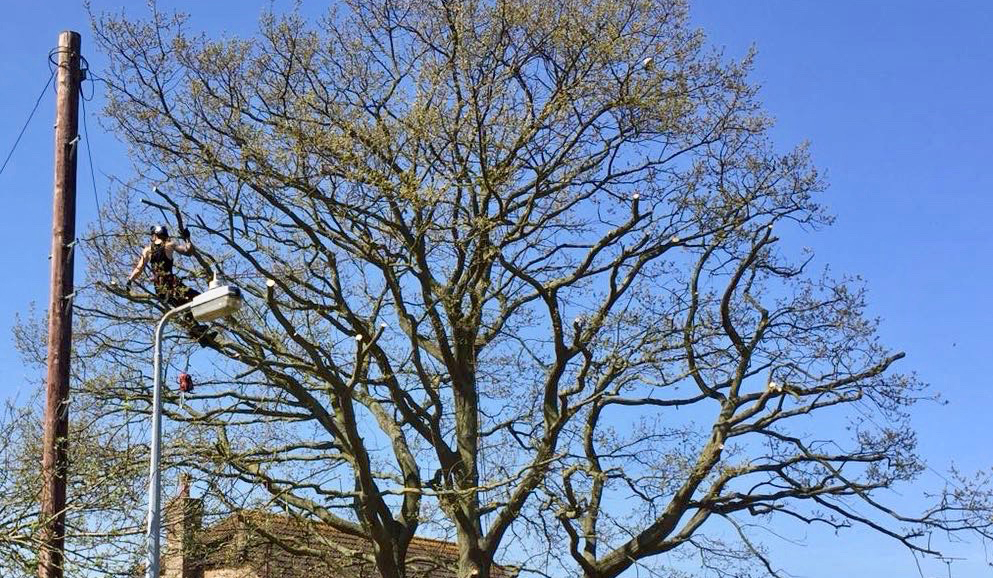 Arbor-Elite Tree Surgery - Oak Tree Reduction in Maldon Essex
