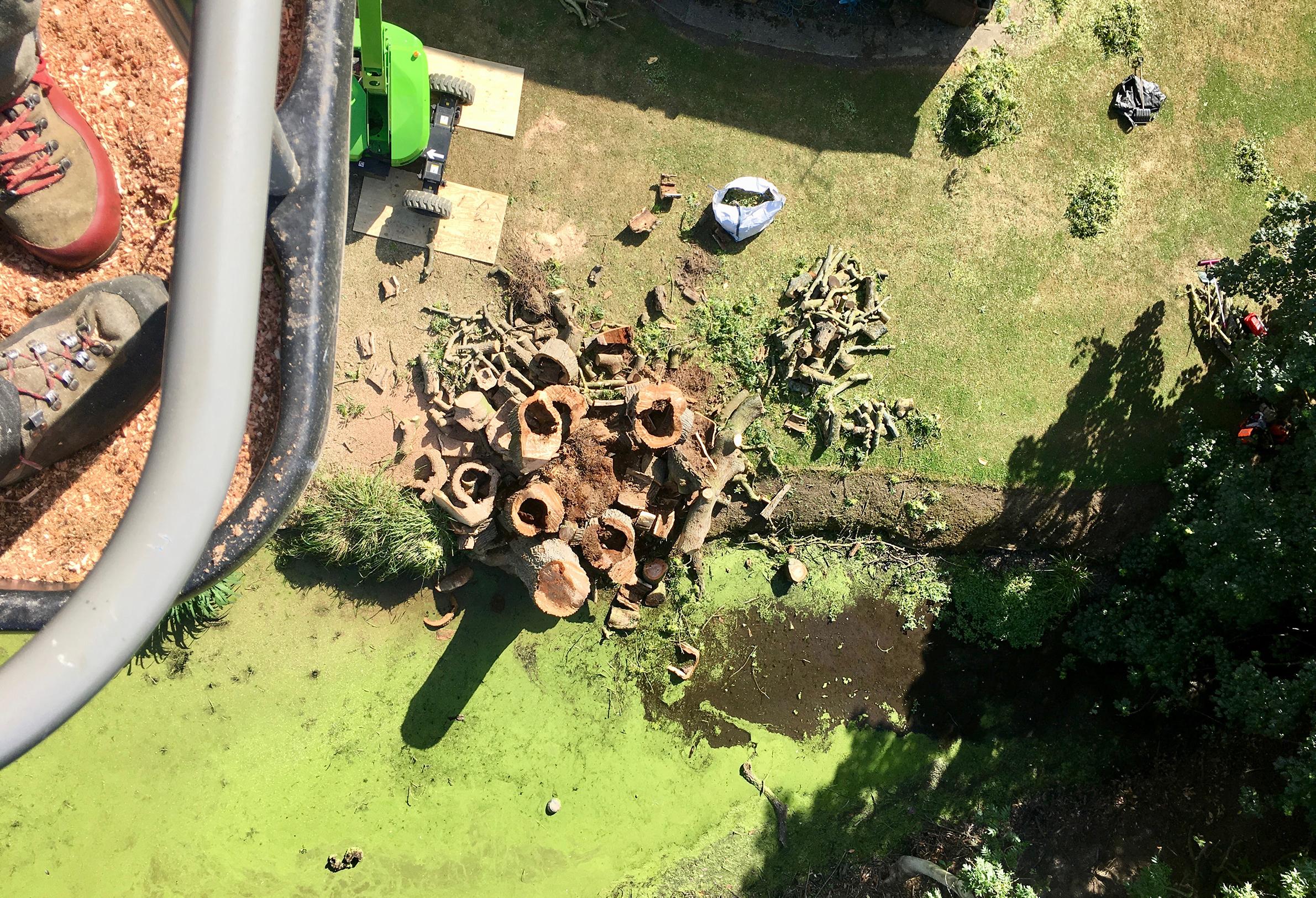 Arbor Elite Tree Surgery, Felling a Dead Ash Tree in Rayne, Essex