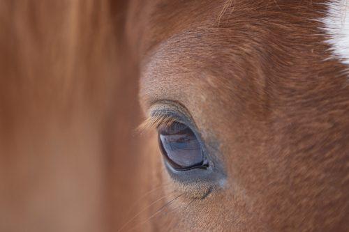 Illustrasjon hest