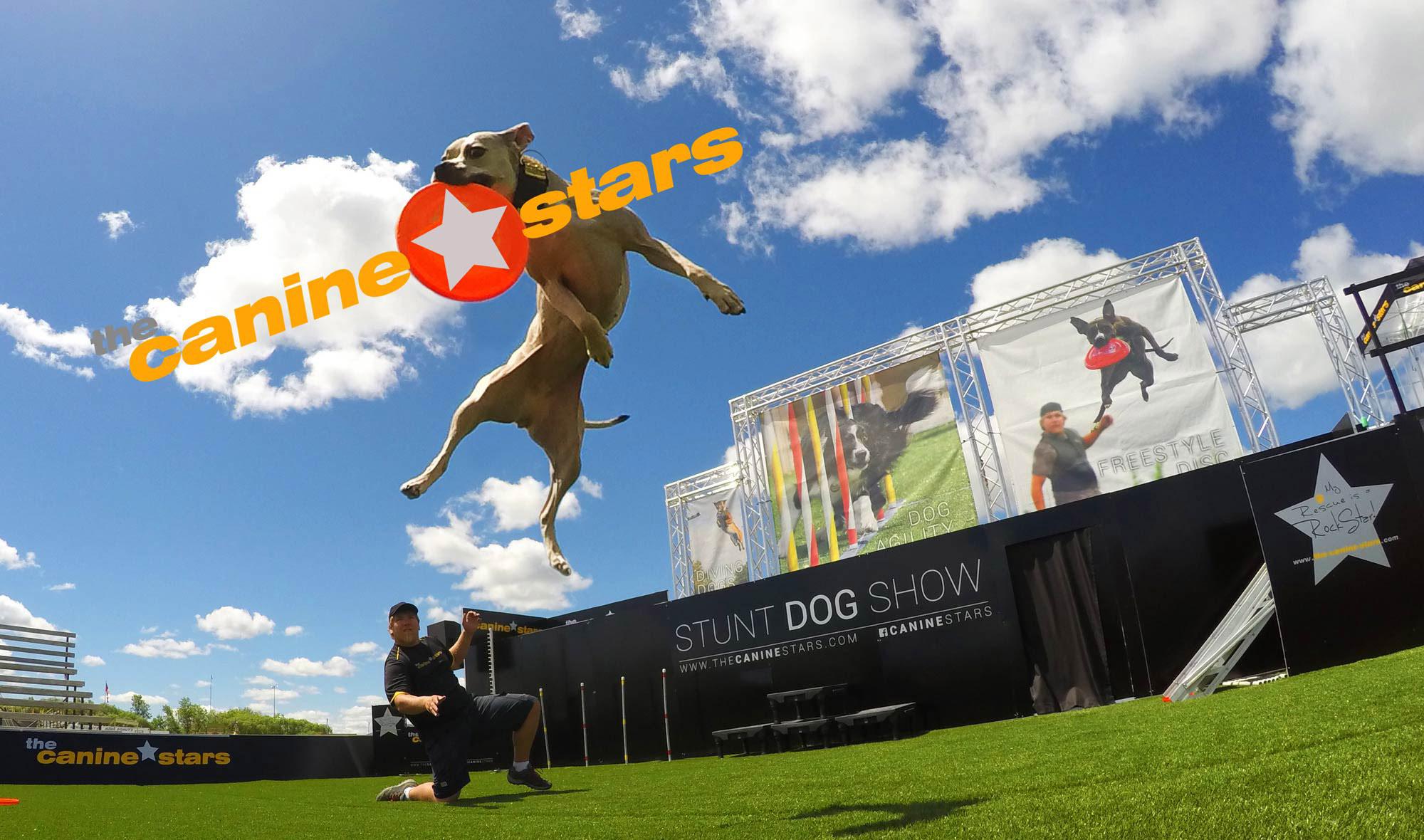 The Canine Stars Stunt Dog Show