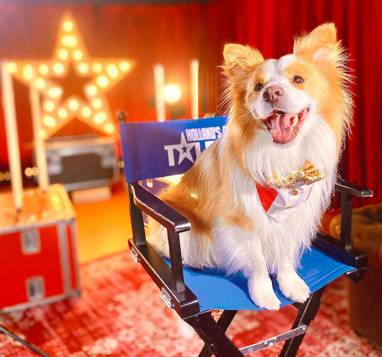 Ruby of The Dancing Collies and Canine Stars on Holland's Got Talent