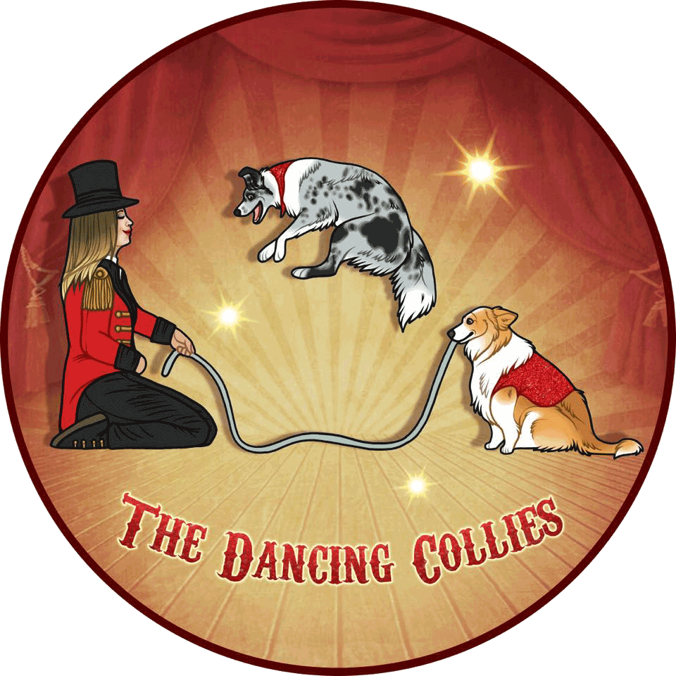 Amber Karsten on YouTube at @TheDancingCollies
