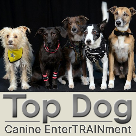 Pam Martin's Top Dog Obedience Training website