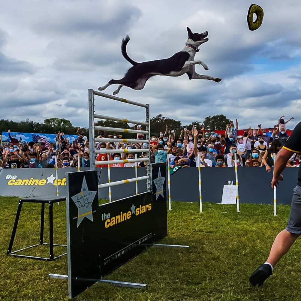 The Canine Stars Stunt Dog Show featuring rescued dogs entertaining with freestyle disc, dancing dogs, and other dog tricks.