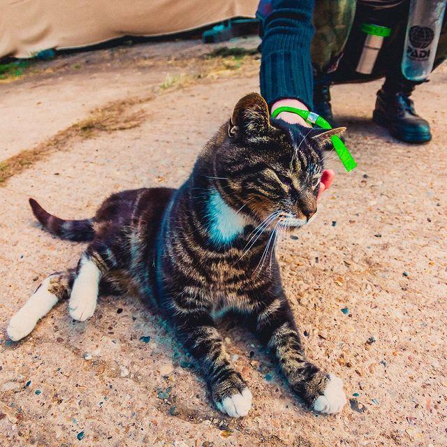 farm cat at festival
