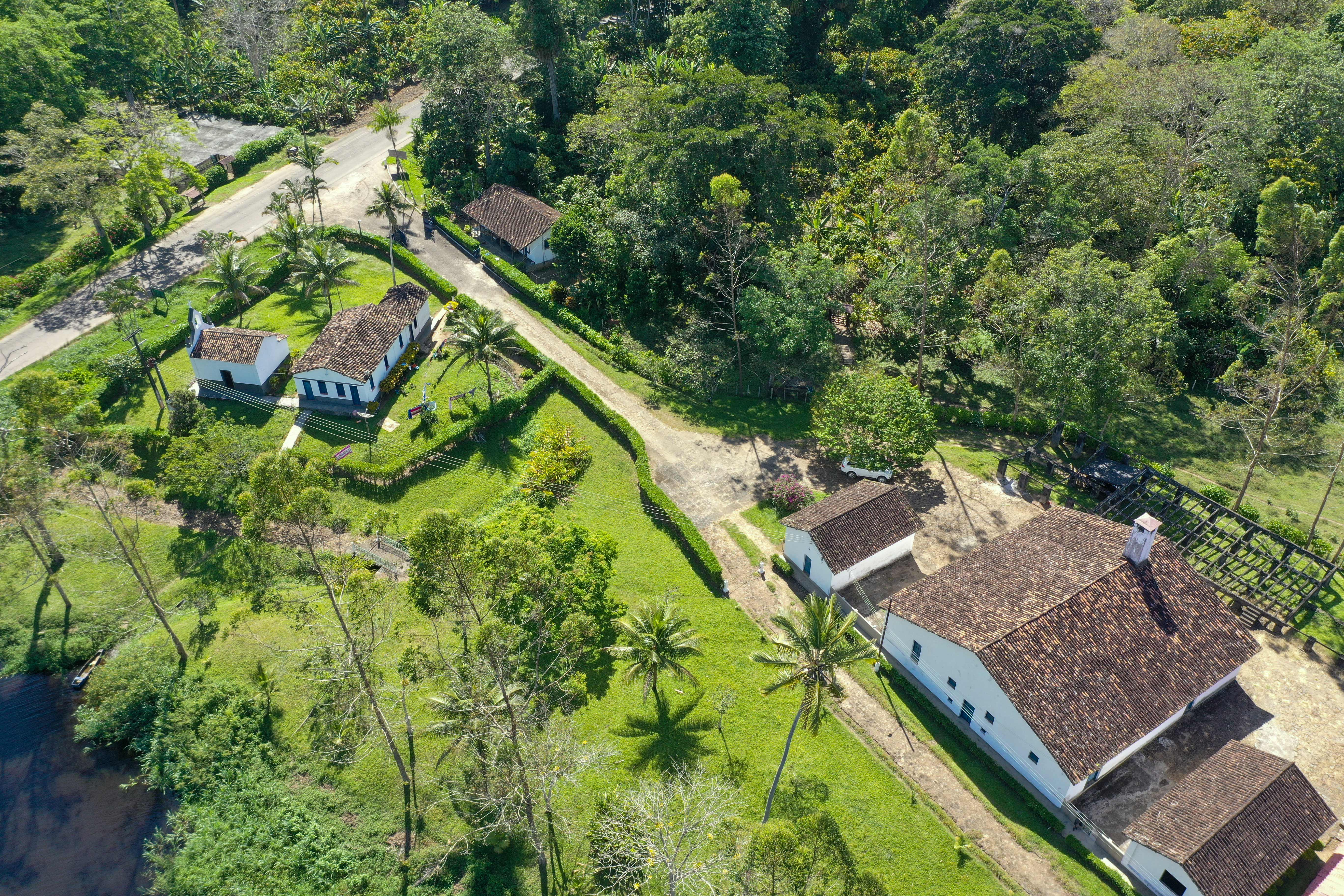 Organic cacao farm in Bahia Brazil surrounded by the Atlantic Rainforest